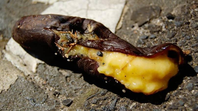 Penis rot