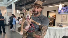Dave Bautista Adopts Abused Puppy And Offers $5k Reward To Find Abuser