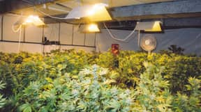 Turns Out Snow Isn't Good For Anyone With A Cannabis Farm