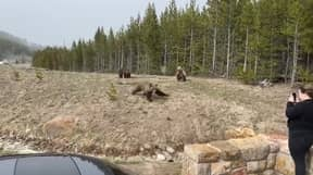 Tourist Faces Year In Prison And Big Fine After Taking Picture Of Bear