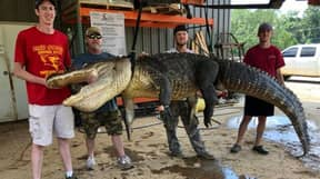 Man Catches Huge Alligator With Priceless Object Discovered Inside It