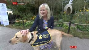 BBC Breakfast's Carol Kirkwood Dragged To The Ground By Guide Dog