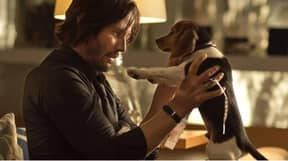 John Wick Directors Had To Fight Studio To Keep Dog's Death In Film