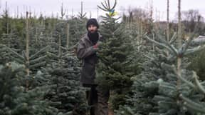Expert Shares Best Time To Buy A Real Christmas Tree So That It Lasts