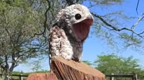 Viral Footage Captures Ghost Bird In Colombia With Terrifying Scream