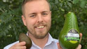 Giant 'Avozilla' Avocados Are Hitting UK Supermarket Shelves Tomorrow
