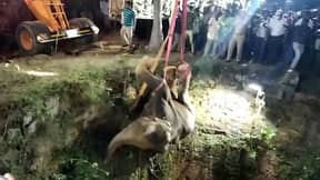 Elephant Pulled To Safety By Crane After Falling Down Well In India