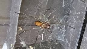 Man 'Living In A Nightmare' After Losing Mysterious Eight-Inch Spider He Found In His Garden