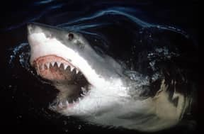 The UK Could Become Home To Great White Sharks Very Soon