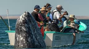 Sneaky Whale Pops Up Behind Sightseers As They Look The Wrong Way