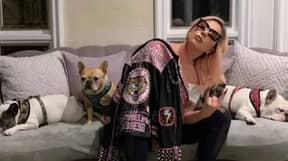 Five Arrested In Connection With Lady Gaga Dognapping And Shooting Of Dog Walker