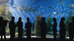 Melbourne's Aquarium Is Doing Boozy Bottomless Painting Sessions