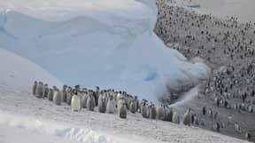 Scientists Discover New Emperor Penguin Colonies In Antarctica Through Satellite Imaging