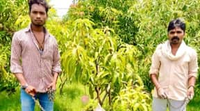 Farmers Accidentally Grow The 'World's Most Expensive Mango'