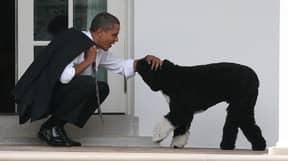 The Obamas' Beloved Pet Dog Bo Has Passed Away