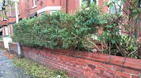 Residents Search For 'Phantom Bush Trimmer' Operating Under Cover Of Darkness