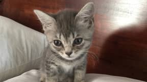 Woman Petitioning For Law Change After Tragic Death Of Her Kitten