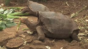Diego The Tortoise Virtually Saved His Species Cause He Was A Sex Pest