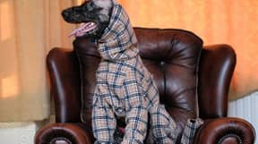 Dog Who Lost Fur Due To Rare Condition Gets Specially Made Burberry Outfit