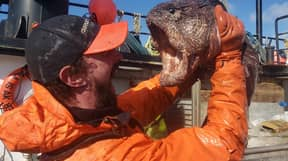 Fisherman's Bizarre Catch Dubbed 'Real-Life Sea Monster' By Social Media Users