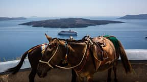Santorini Launches Campaign To Stop Tourists Riding Donkeys Up Massive Hills