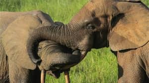 Notorious Elephant Poacher Sentenced To 30 Years In Jail In Landmark Case