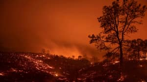 Earth Is 1C Away From Hothouse State That 'Threatens Future Of Humanity'
