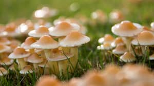 Man Injected Himself With 'Magic Mushrooms' And Fungi Grew In His Blood