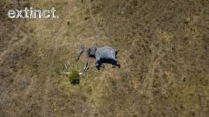 Shocking Photograph Of Butchered Elephant Shows True Horror Of Poaching