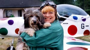 The Real Story Of Pippin, The Famous Come Outside Dog