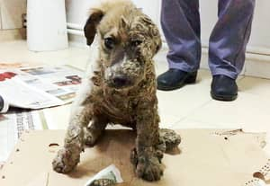 Stray Puppy Left For Dead After Being Dragged Through Industrial Estate