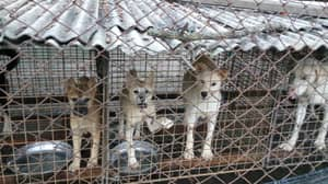 Animal Rights Charity Shares Shocking Pictures Of Caged Puppies