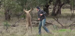 Zookeeper Who Punched Kangaroo In The Face Will Keep His Job