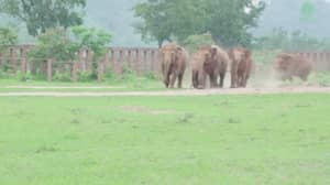 Watch This Herd Of Elephants Greet A Rescued Orphan Baby Elephant
