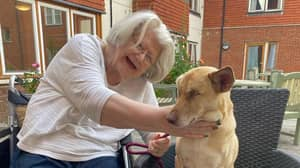 Blind Therapy Dog Once Used As Target Practice Reunited With One Of Her 'Favourite' Care Home Residents