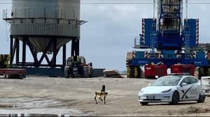 Robot Dog Inspecting SpaceX Wreckage Reminding People Of Black Mirror Episode