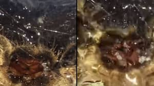 Spider Drinking Water From Up Close Will Make Your Stomach Churn