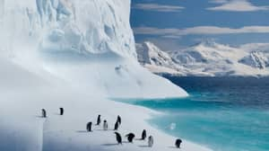 Sir David Attenborough's Netflix Documentary Series Our Planet Is Released Today