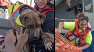 Women And Dogs Battle Sharks To Survive For Five Months Lost At Sea