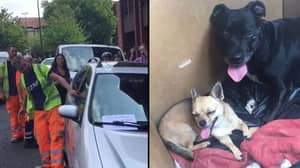 Hero Workman Smashes Car Window To Save Dogs Dying In Heat