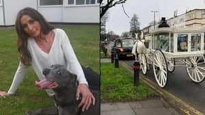 Heartbroken Dog Owner Forks Out £4,000 On Extravagant Funeral For Pet