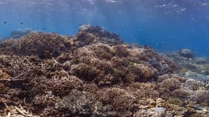 Great Barrier Reef Authority Stands Up to the Australian Government On Climate Change