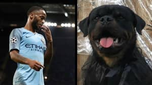 Raheem Sterling Has Bought A £15,000 Dog To Protect His House