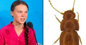 Greta Thunberg Has New Species Of Beetle Named After Her By Scientists