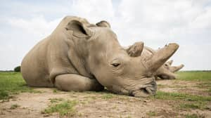 Devastated Woman Sits Next To White Rhino Killed For Her Horn