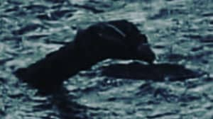 'Loch Ness Monster With Four Foot Neck Pictured' By British Historian