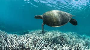 The Future Of The Great Barrier Reef Downgraded To Very Poor