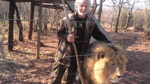 Three ​Lions Shot Dead After Mauling Their Keeper To Death