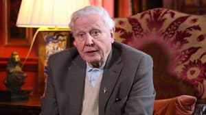 David Attenborough Reveals His Biggest Regret To Louis Theroux