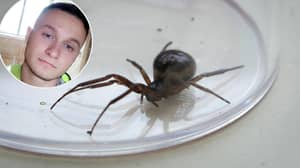 Man Warns Brits About UK Spiders After False Widow Left Him One Day From Death